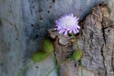 Robinson Park Reserve, Jamestown - Flora (SA)