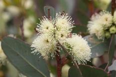 Pallinup Nature Reserve - Flora (WA)