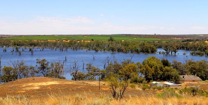 Murray River (SA)