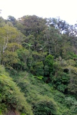 Eungella National Park (Qld)