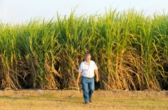 Burdekin Cane Farm Stay, Brandon - Collecting The Cane (Qld)