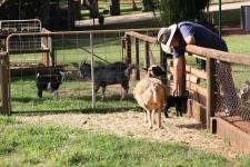 Malanda Falls Caravan Park - Mini Farm (Qld)