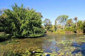 Townsville - Palmetum Gardens (Qld)