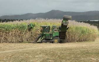 Dimbulah Area - Sugar Cane Harvesting (Qld)