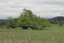 Glenn Innes Countryside (NSW)