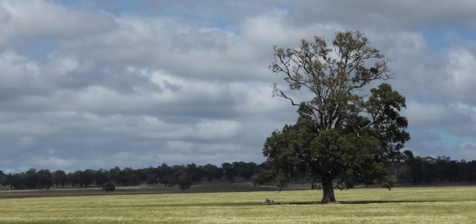 Dunedoo - Landscape (NSW)