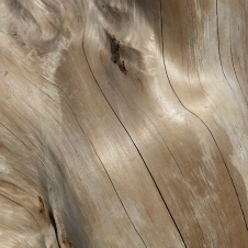 Petal Point - Bleached Timber (TAS)