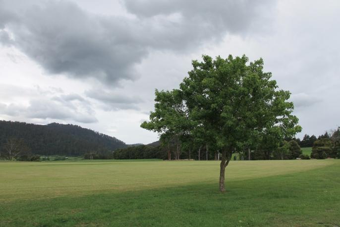 Pyengana Recreational Reserve (Tas)
