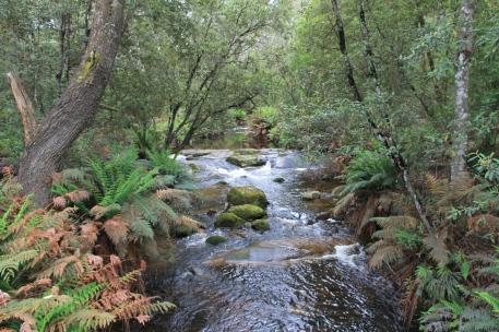 Ransom River (Tas)