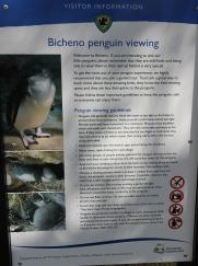 Bicheno - Little Penguins (Tas)