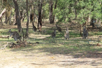 Riddells Creek - Treetops Scout Camp (Vic)