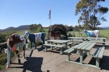 Elizabeth Town - Ashgrove Tasmanian Farm - Dairy Products (Tas)
