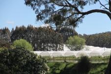 Elizabeth Town - Christmas Hills Raspberry Farm (Tas)