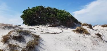 Friendly Beaches (Tas)