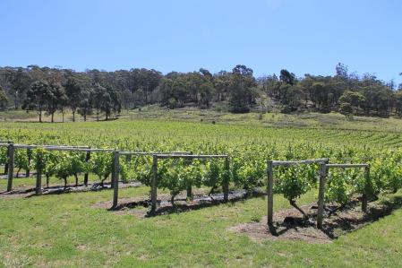 Freycinet Winery (Tas)