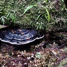 Trowutta Arch, Tarkine Drive - 'Fungi 4' (TAS)