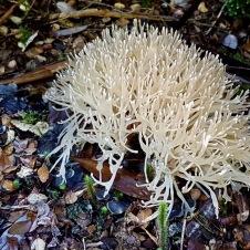 Strahan - Gordon River Heritage Walk - 'Fungi 7' (TAS)