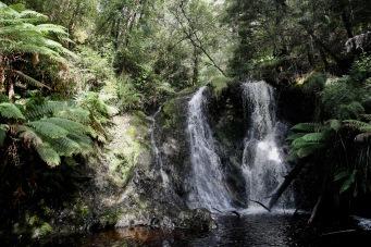 Strahan - Hogarth Falls (Tas)