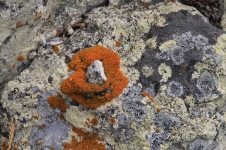 West Point - Rock Surface - 'Fungi 5' (TAS)