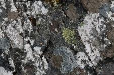 Cradle Mountain-Lake St Clair National Park - Rock Surface- 'Fungi 6' (TAS)