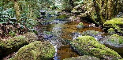 Nelson Falls Walk (Tas)