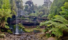 Mount Field National Park - Russell Falls (Tas)