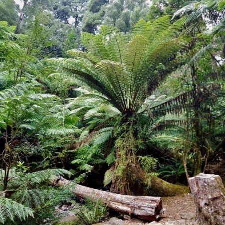 Mount Field National Park (Tas)