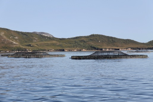 World Heritage Cruise - Salmon and Ocean Trout Aquaculture (Tas)