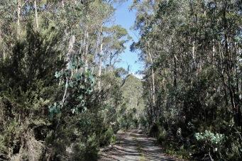 Harbacks Road (Tas)