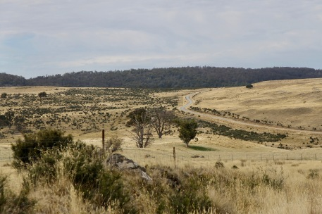 Road To Bronte Lagoon (Tas)