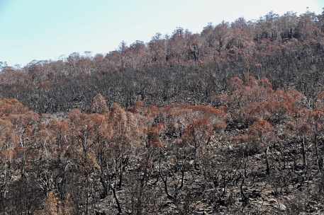 """Little Pine Lagoon Area - """"After The Fires"""" (Tas)"""