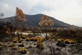 Maydena - Result Of Recent Bushfires (Tas)
