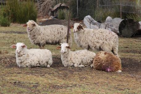 Birchs Bay - Grandvewe Cheeses Herd(Tas)
