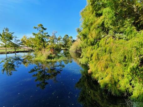 Penshurst Botanical Gardens (Vic)