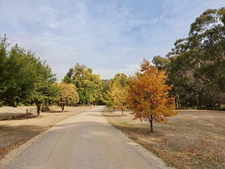 Glenlyon - Recreational Reserve - 'Autumn Colours' (Vic)