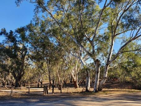 Jerilderie - Billabong Creek Campsite (NSW)