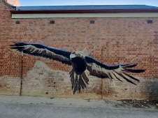 Jerilderie (NSW)