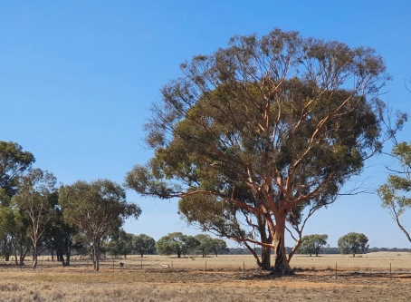Jerilderie To Lockhart (NSW)