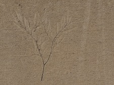 Gulgong - Footpath Art (NSW)