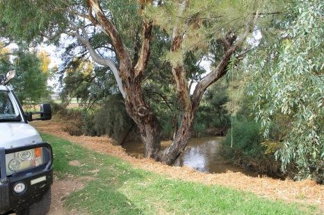 Canowindra - Campsite (NSW)