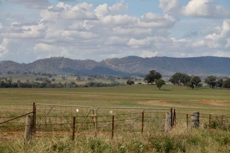 Molong - Farmland (NSW)